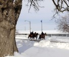 Feb 9 Thoroughbreds Test Out Woodbine