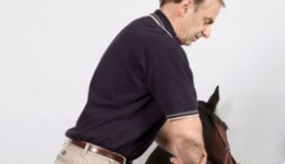 Restrictions in the sacroiliac joint, the deepest joint in the body, are very common in horses and chiropractic can often help more than other therapies.
