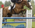 Winette, owned and ridden by Tatiana Dzavik, won the Seven- and Eight-Year-Old Division of the Jump Canada Young Horse Series held May 27 at the Concours Hippique de St. Lazare in St. Lazare, QC. Photo by Cealy Tetley, www.tetleyphoto.com