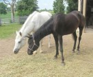 Sandra's new addition with her 20+ year old mare Sophia.