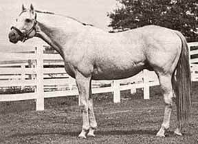 Native Dancer's only loss was at the 1953 Derby.