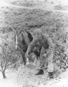 Sgt. Reckless, on duty.