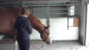 As soon as your horse moves to lower his head from the upward position, click and release the rope.