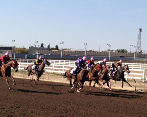 The Powder Puff Derby at Northlands park, women who have never been in a horse race before - trainers and exercise riders.. EquiSports Therapy photo