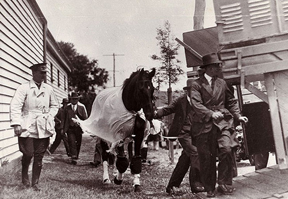 Phar Lap arriving for The Melbourne Cup.