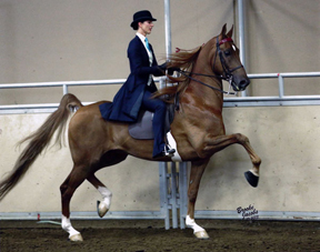 Stephanie Brown and Foxcroft Firestorm. Photo by Brooke Jacobs