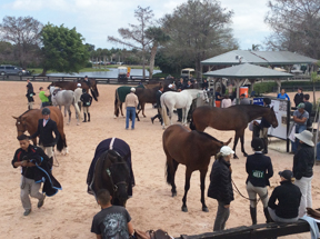 Waiting for results at ringside of Grand Hunter ring.