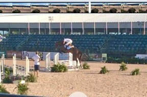 Viewing of the VDL horses - jumping the height of the standards.