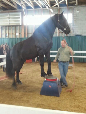 Pax at the Can-Am All Breeds Equine Expo.