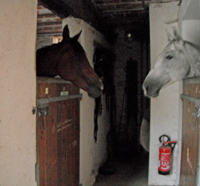 Sam, with this stable mate at Cecile's barn in France.
