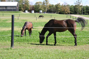 Clean, clear pastures are a healthy place for horses to graze.