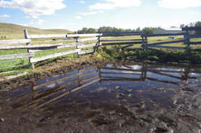 My main enclosed schooling area - and the front fields - ended up just saturated. This has happened so often since the 'Challenge' began.