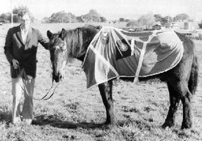 Jarman, a World War II Coast Guard beach patrol veteran, just before he passed away at the ripe old age of 40 in 1974. He served as a patrol horse with the Coast Guard's Beach Patrol in California. He is proudly wearing a blanket that bears his Coast Guard insignia.