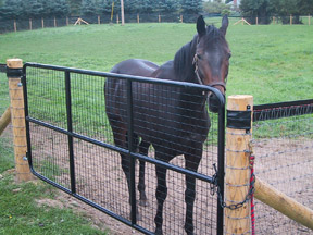 This mesh design will prevent horses from putting a hoof through the gate.
