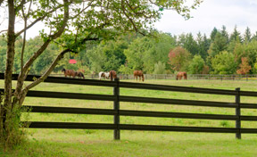 Flex Fencing is designed specifically for the equine industry.