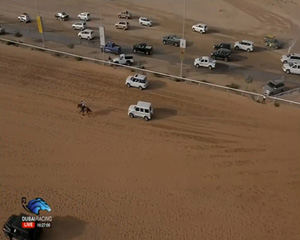 The FEI has disclosed that Sheikh Mohammed was in one of the vehicles seen in this photo, chasing after a horse as it approached the finish line in the Sheikh Mohammed Cup.