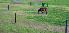 Electric fencing acts a psychological barrier for horses.