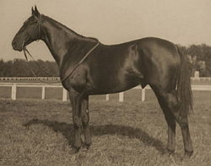 Battleship looked like his sire, Man O' War.