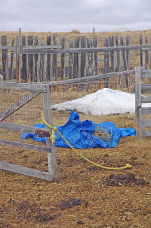 And yet these blue tarps were trotted straight over.""