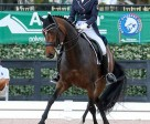 Tina Irwin and Fancy That won the FEI Intermediaire 1 Freestyle CDI-W 1* at the AGDF. Photo by Susan J Stickle