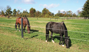 Deciding how many horses you would like to keep on your new property will go a long way to determining the size of properties you should be looking at.
