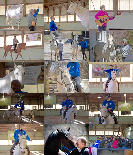 """The photos were taken by Ellen Cameron April 26th at the fundraiser for Silver Willow Farm Rescue. She is able to capture the thoughts of the horse and the human. Row 1: Here is Allen Kalpin multi-tasking with """"When You're Happy and You Know It, Salute!"""" Zelador presents a lovely salute. Zelador is being asked if he's ready to retrieve the boomerang over the jump. Moments ago he was clean and tidy, then he did his lie down with a roll. Marie-Lynn Hammond singing her song """"The Naughty Pony"""". Row 2: Allen Kalpin on Blue Executive demonstrating dressage exercises Love the wind tossing the forelock on Zelador. He's REALLY ready to take charge of the universe! Zelador being led from the upper barn to the arena by Sue is one of my favourites. Row 3: I'm asking Zelador if he's OK. He'd just had his big escape adventure outside. Peace reigns. Zelador and I are preparing for our Jump Rope and Hula Hoop routines. Zelador with the jump rope. Row 4: A job well done """"jumping rope"""". The hula hoop scramble with the horses calmly doing their part. Hoops! Row 5: I've just thrown a hoop over Bill's head and it has settled around his waist. This is my FAVOURITE PART! Ron Marino with his Canadian, Pax. The crowd."""
