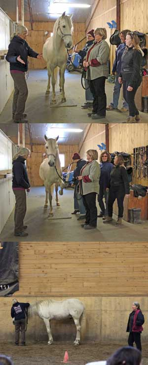 Here are a few photos from the first-ever Cavalia Click That Teaches Clicker Clinic!