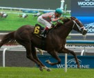 Conquest Pacemaker won the $131,500 Toronto Cup under Eurico Da Silva at Woodbine. Photo by Michael Burns Photography