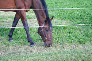 A horse's water consumption may decrease if the horse is on a lush, green pasture.
