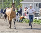 Ian Millar of Perth, ON, and Dixson, owned by Susan and Ariel Grange.
