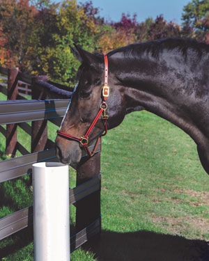The Drinking Post is an automatic waterer that can be installed in a paddock or in a stall and does not require electricity.