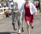 Colleen Loach, 32, of Dunham, QC, presents Qorry Blue d'Argouges at the horse inspection. (Cealy Tetley photo)