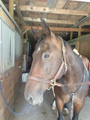 Photo of my Canadian sport horse Nero. My last Canadian ride before Mongolia!