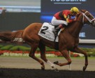 Theogony won the $108,000 Belle Mahone Stakes, at Woodbine, with Gary Boulanger in the irons. Photo by Michael Burns Photography