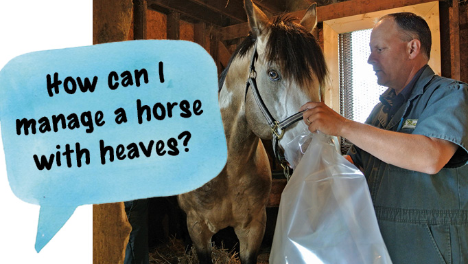 Natural Treatment For Heaves In Horses