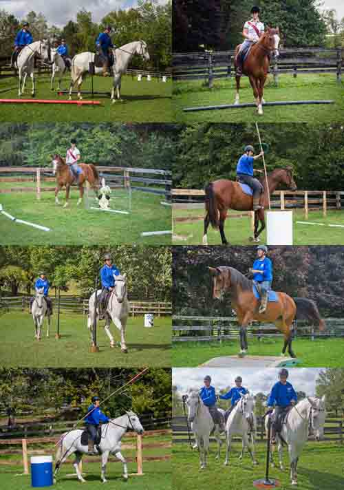 """Row 1 Left: Here's Zelador walking forwards through the """"L"""". At the end he halts and the rider rings the bell. The next step is to back through the """"L"""". Right: Sophie Lapin riding Kye sideways over the pole. At the highest level of competition the World Champion, Oxidado, did a canter full-pass for this obstacle. Row 2 Left: Zelador is doing the slalom. The first pole is on the horse's right side. Right: Spring Song with the rider placing the garrocha pole and the ring in the barrel. Row 3 Left: Sophie Kalpin is riding Kye around the pen. The """"animal"""" in the middle is a very large toy bunny. In competitions there are live animals in the pen, often baby chicks or ducks. At one competition Kimberly rode around an adult turkey. Right: Spring Song on the bridge. Row 4 Left: Zelador understands the garrocha pole routine perfectly. He's all business as the rider heads for the ring. Right: Zelador is at the gate obstacle. A cloth or rope gate is quite common at a competition because erecting a wooden gate can be very time-consuming, costly and create holes in the ground for sturdy posts. Often the posts are only needed for the event and have to be removed afterwards. All of these factors led to the simpler cloth/rope construction."""