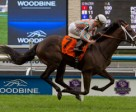 Conquest Daddyo is one of Mark Casse's Breeder's Cup hopefuls. Photo by Michael Burns Photography