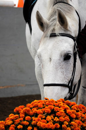 Luc and I stop to smell the flowers after a hard ride (for me, not him!).