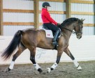 Jennifer McKenzie from Maple Ridge, BC was one of 17 riders to enjoy the Para-Equestrian Canada Athlete Development Clinic series, which featured dates in both Eastern and Western Canada with world-class Para-Equestrian coach, Mary Longden. Photo by Cara Grimshaw