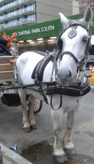 carriage-3