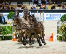Koos de Ronde (NED) drove the only clear round of the evening and took the lead in the FEI World Cup™ Driving Final in Bordeaux. Photo by FEI/Eric Knoll