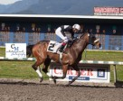 Modern was the easy winner of the Swift Thoroughbred Inaugural Stake. Photo by Patti Tubbs