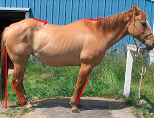 This horse is dealing with several challenges, including uneven muscle tone in his hind quarters, an underdeveloped topline, and sickle hocks (among other things). The front legs appear to be pulled under to protect the horse's feet and stiff back, the underside of his neck is tight, and he is standing in an overall defensive or uncomfortable posture.