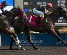 Black Hornet won the Grade III Vigil Stakes at Woodbine. Photo by Michael Burns Photography