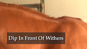 Dip-in-Front-of-Withers
