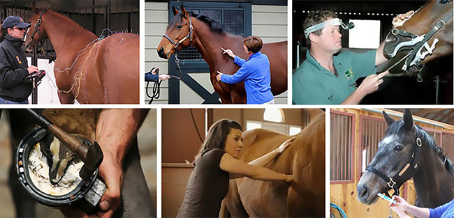 Top Left: Acupuncture treatment by Dr. Joanna Robson (photo courtesy of Dr. Joanna Robson); Top Middle: Vet giving an IM injection; Top Right: Vet administering a dental 'Floating' treatment;Bottom Left: Farrier nailing on a shoe; Bottom Middle: Equine Massage Therapist in action; Bottom Right: Administering of a scheduled deworming treatment. (Photos: Internet with the exception of Dr. Joanna Robson photo top left)