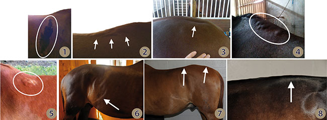 The goal of saddle fitting is to prevent discomfort, behavioral issues and damage by avoiding pressure on reflex points and distributing the rider's weight optimally over the saddle support area. Listen to what your horse is trying to tell you and make sure your saddle is checked regularly for proper fit!