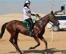Emma Finnie, a British ex-pat, is being investigated by Endurance GB following her controversial ride at an Endurance competition in the UAE.