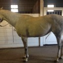 Trained & Well Bred AQHA mare