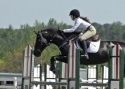 Successful A Circuit Hunter/Jumpers - Sale/Paid Lease